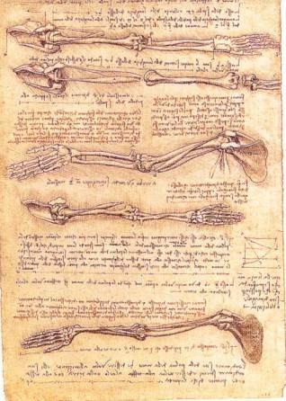 apparato scheletrico.jpg