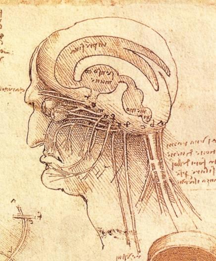 sistema nervoso.jpg